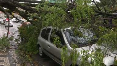 Temporal deixa estragos em Curitiba e São José dos Pinhais - Árvores cairam em várias bairros, várias em cima de carros.