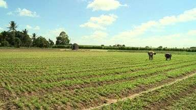 Pequenos produtores rurais do agreste falam sobre a falta de investimento no setor - Apesar de 2014 ter sido eleito pela ONU como o Ano Internacional da Agricultura Familiar, pequenos produtores mostram carência no setor.