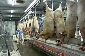 Porco ibérico é criado especialmente para fazer o presunto pata negra - Espanha produz hoje 1 milhão de peças de presunto pata negra por ano. Processo todo de produção leva, no mínimo, três anos.