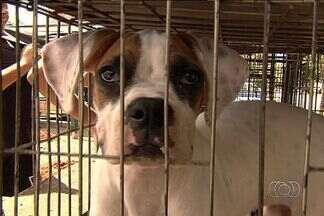 Prefeitura fiscaliza venda de animais de estimação em feiras de Goiânia - O objetivo da operação foi verificar se os cachorros ofertados eram produto de roubos.