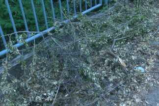Galhos de árvore podada são jogados na calçada - Situação ocorreu entre a Rua Caetano Moura e a Avenida Garibaldi. Sucop informou que os galhos não atrapalham a passagem de pedestres e que seriam retirados na noite desta terça.