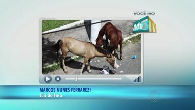 Morador reclama de irregularidade em praça de Juiz de Fora - Animais soltos em área no Bairro Nossa Senhora Aparecida mexem no lixo descartado pela população.