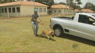 Campus de instituto federal quer ser referência em adestramento de cães no país - Campus de instituto federal quer ser referência em adestramento de cães no país