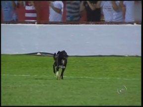 Cachorro invade o campo, dá olé e incendeia jogo do Paulistão em Lins - Um cachorro invadiu o campo do estádio Gilbertão e deu um tempero extra ao empate por 0 a 0 entre Linense e Rio Claro, na noite desta terça-feira, em Lins, pela segunda rodada do Campeonato Paulista.