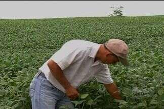 Justiça libera produtores de pagamento de taxas cobradas pela Agrodefesa em Goiás - As taxas são referentes à área plantada na safra de verão.
