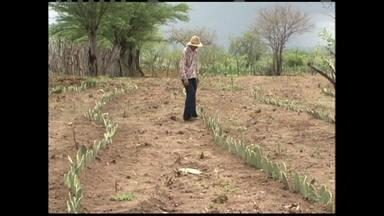 Em algumas regiões do estado chuvas ainda não são o suficiente - Ainda é preciso cair mais chuva para garantir capim no pasto e aumento na produção de leite.