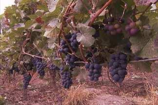 Província de Mendoza é uma das maiores produtoras de vinho - Plantio é feito perto da Cordilheira dos Andes, na região oeste da Argentina. Clima certo e água do degelo atraem produtores de outras partes do mundo.