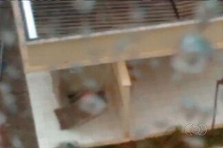 Chuva forte arranca porta em condomínio, em Goiânia - Choveu forte na tarde desta terça-feira (28) em algumas regiões de Goiânia. A telespectadora Isabelle Almeida registrou o momento em que uma porta foi arrancada pela força da água, no condomínio em que mora.