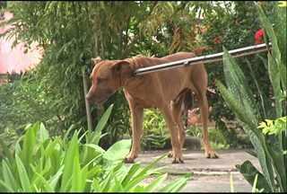 Bombeiros apreendem cão que atacou 3 pessoas - Uma criança foi a última vítima do animal, que ainda não teve o dono identificado. O CCZ não tinha carro para resgatar o cão.