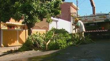 Prefeitura tem seiscentos pedidos de poda e manutenção de árvores em São Carlos, SP - Prefeitura tem seiscentos pedidos de poda e manutenção de árvores em São Carlos, SP.