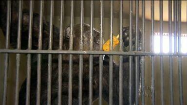 Animais do zoológico de Curitiba ganham picolé para refrescar o calor - Outros são alimentados com frutas congeladas.