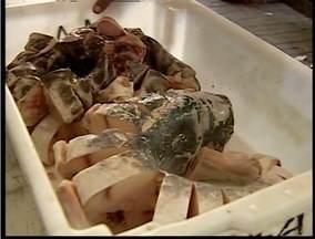 12 toneladas de peixe estragados são apreendidos no Mercado Municipal de Valadares - De acordo com a Vigilância Sanitária, apreensão foi feita após o recebimento de denúncia anônima.