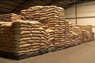 Investimento nos cafezais - Preço da saca do café continua desagradando produtores da região de Marília. Muitos investem nos cafezais na expectativa que futuras safras sejam melhores