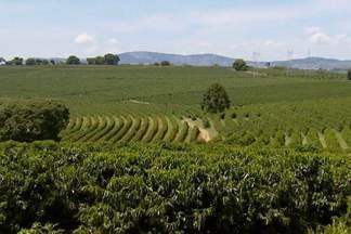 Calor e falta de chuva trazem prejuízos para lavouras de várias partes do país - Clima vem mexendo com cotações dos produtos agrícolas no cenário internacional.