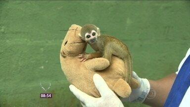Projeto 'Mães de pelúcia' ajuda a criar ambiente maternal para animais resgatados - Em 2013, foram resgatados cerca de 2 mil animais por dia das mãos do tráfico