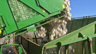 Dilma visita Lucas do Rio Verde e atende pedidos de produtores de algodão - A presidente anunciou o reajuste do preço mínimo do produto.