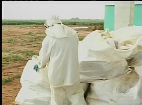 Posto de recebimento de embalagens de defensivos agrícolas vai beneficiar 14 municípioss - Posto de recebimento de embalagens de defensivos agrícolas vai beneficiar 14 municípios.