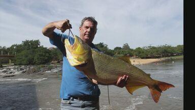 Corretor de imóveis fisga dourado de quase 14 quilos em Pirassununga, SP - Peixe tem noventa e três centímetros de comprimento e pesa treze quilos e setecentos gramas.