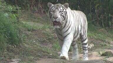 Famílias de SP visitam zoológico no feriado prolongado - Famílias de SP visitam zoológico no feriado prolongado.