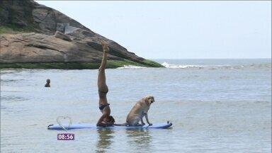 Stand Up Paddle Dog é a novidade do verão - Amantes do esporte se divertem na companhia de seus cães