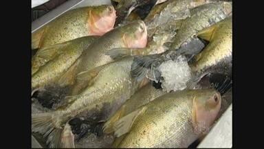 Em Ariquemes, parceria entre pescadores e Ministério da Pesca vende 22 toneladas de peixe - Em apenas três semanas.