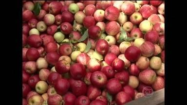 Compota de maçã é receita ideal para aproveitar a safra da fruta - Agricultores do Paraná estão animados com a colheita da maçã. O frio ajudou na qualidade da fruta, que está mais vermelha e doce.