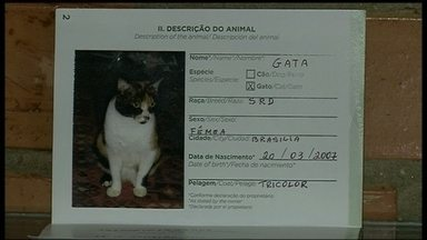 Gata é primeiro bicho de estimação a receber passaporte animal no DF - Uma gata do DF foi o primeiro bicho de estimação a ganhar um passaporte animal. Teve direito à cerimônia para receber o documento.