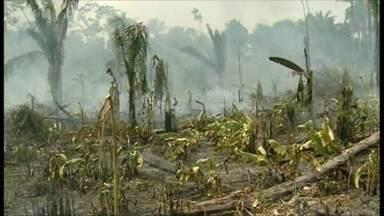 Incêndios afetam plantações de banana no norte de Roraima - A época é de seca na região. O fogo se alastra rapidamente e afeta plantações de banana e áreas de floresta. Produtores lamentam as perdas. Cinco brigadas do Ibama com 90 homens tentam fazer o controle dos focos de incêndio.