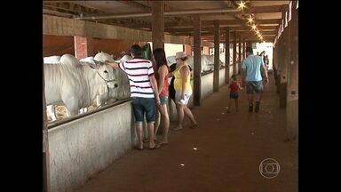 Expo Paranavaí 2014 atrai centenas de pessoas para a cidade paranaense - Leilão de gado, julgamentos e tecnologia são alguns dos atrativos do evento. Pessoas de todas as idades lotam o parque de exposições.