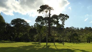 Globo Horizonte visita o Instituto Inhotim, em Brumadinho - No fim do ano pasado, o Inhotim passou pela maior renovação do acervo desde que foi criado.