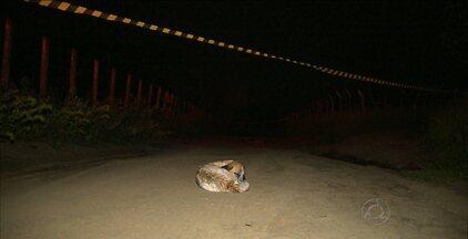 Cachorro fica o tempo todo perto de corpo da dona após crime em João Pessoa - Mulher foi assassinada e decapitada no bairro Valentina Figueiredo.