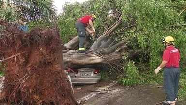 Bombeiros registram 13 quedas de árvore no DF após temporal - No ano passado, 470 árvores caíram no DF, segundo a Novacap. Na chuva desta sexta-feira, algumas caíram sobre carros em várias regiões.