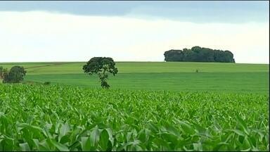 Plantio do milho safrinha chega próximo ao fim em Goiás - O clima está ajudando o desenvolvimento das lavouras. As boas condições aceleraram o plantio do milho safrinha, que já está terminando.