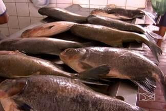 Proximidade da Semana Santa aumenta a procura pelo pescado no mercado no MA - É preciso estar atento às dicas dos feirantes na hora de levar o produto para casa.