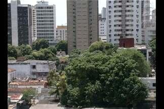 Pesquisa da UFPA aponta redução da quantidade de árvores em Belém - Redução da cobertura vegetal tem reflexos diretos no clima da cidade.