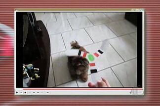 Tô na Fita: Praticante de bumerangue aposta na divulgação do esporte - Ele usa o animal de estimação como garoto propaganda.