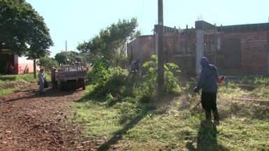 Um mutirão de limpeza é feito em Sarandi para acabar com focos do mosquito da dengue - A cidade tem 168 casos confirmados da doença