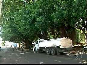 Gameleiras causam transtornos aos moradores de Ituiutaba, MG - Árvores quase centenárias devem desaparecer da paisagem urbana. Segundo secretário de obras, boa parte das árvores devem ser substituídas.