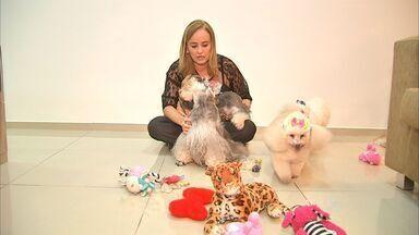 Veja como é o dia a dia de quem 'adota' cães como parte da família - Repórter André Teixeira visita casas com habitantes especiais