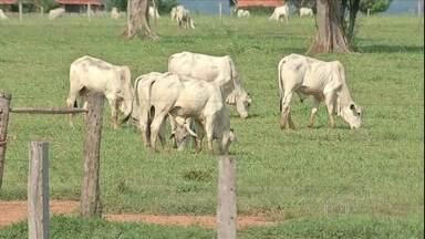 Ministério da Agricultura diz que caso da Vaca Louca é atípico - Após o Ministério da Agricultura confirmar que o caso de vaca louca registrado em Mato Grosso é atípico, a tranquilidade voltou às fazendas. O setor quer agora recuperar os mercados perdidos.
