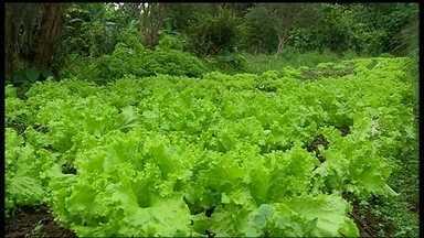 Produtos orgânicos trazem benefícios para o organismo e para o meio ambiente - Na produção dos alimentos orgânicos, agrotóxicos não são usados gerando vários benefícios para a natureza, animais e seres humanos.