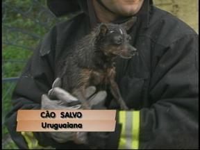 Incêndio marca o início da semana em Uruguaiana, RS - Cachorro da família foi salvo das chamas e ninguém se feriu.