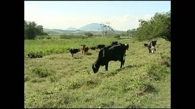 Estiagem está dificultando a recuperação das pastagens - Na região do Vale do Orobó, no Sul do Espírito Santo, a estiagem está dificultando a recuperação das pastagens.