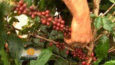 Veja quais são os destaques do Caminhos do Campo - Preço da saca do café está deixando os produtores mais animados