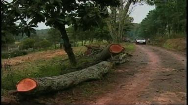 Vento forte causa queda de árvores em Erechim, RS - Alguns pontos da cidade ficaram sem energia elétrica.
