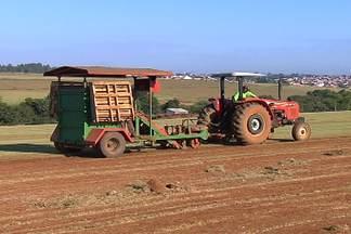 Copa do Mundo impulsiona mercado da grama em SP - Obras de infraestrutura em rodovias e aeroportos fazem os agricultores correr contra o tempo para dar conta de tantos pedidos.