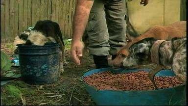 Patrulha Ambiental da BM encontra mais de 20 animais abandonados em casa de Rio Grande, RS - Não é a primeira vez que o dono dos animais é autuado por maus tratos.