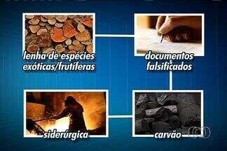 PF faz operação contra extração ilegal de madeira em Goiás e outros seis estados - A Operação Metástase acontece no Dia Mundial do Meio Ambiente. Segundo a PF, a organização visava, principalmente, a extração no cerrado.