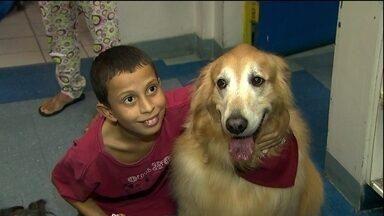 Crianças doentes recebem a visita de animais nos hospitais - Em São Paulo, uma ONG que faz um trabalho que alegra e ajuda na recuperação da garotada que está internada nos hospitais da cidade. A visita dos bichinhos ajuda na recuperação e deixa todo mundo mais feliz.