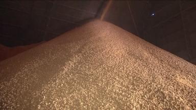 Exportações brasileiras de soja estão batendo recorde este ano - No Paraná, os agricultores comemoram o bom momento.